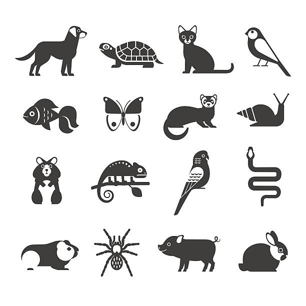 ilustraciones, imágenes clip art, dibujos animados e iconos de stock de pets icons set. - animales de granja