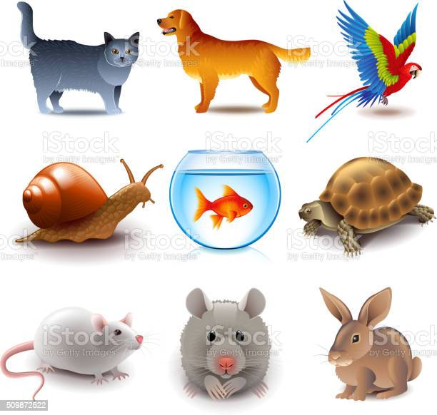Pets icons vector set vector id509872522?b=1&k=6&m=509872522&s=612x612&h=lpojqepw4uvt krwmeqkphozl5cyfx k lvhk9054j4=