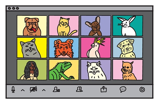 Pets in a video conference / Vector illustration