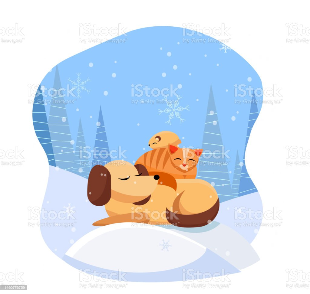 Pets sleeps comfortably on snowdrift in snowy forest. cat sleeps on...