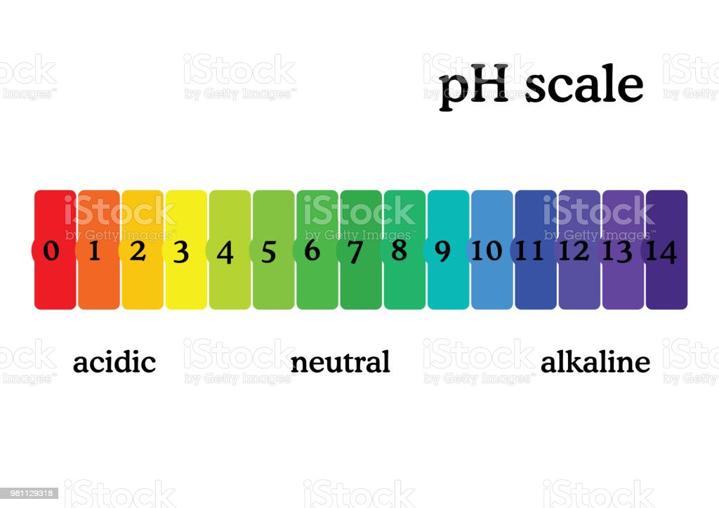pH scale diagram with corresponding acidic or alcaline values. Universal pH indicator paper color chart. vector art illustration