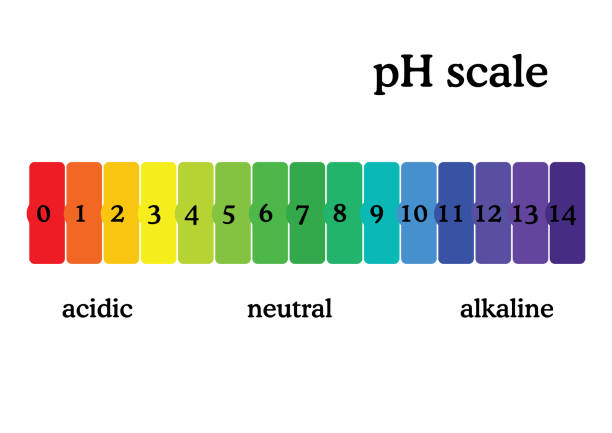 pH scale diagram with corresponding acidic or alcaline values. Universal pH indicator paper color chart. pH scale diagram with corresponding acidic or alcaline values. Universal pH indicator paper color chart. Colorful flat style vector illustration isolated on white background. acid stock illustrations