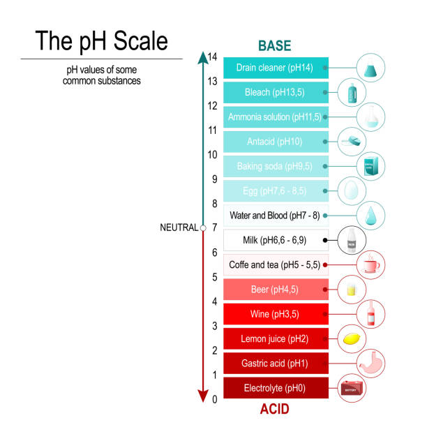 pH scale pH scale with pH values of some substances. Vector diagram acid stock illustrations