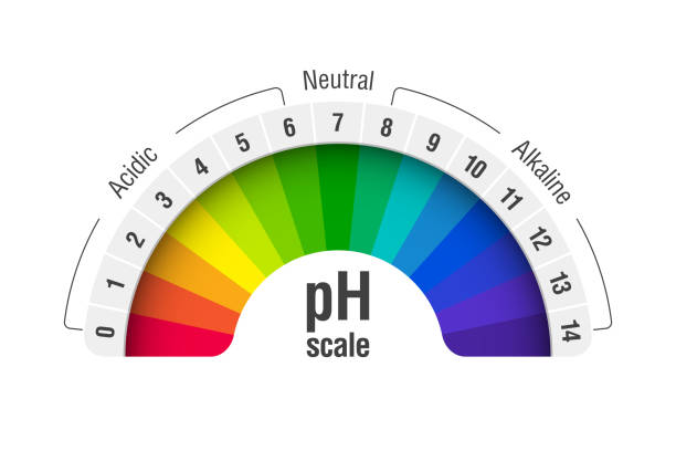 pH value scale chart pH value scale chart for acid and alkaline solutions, acid-base balance infographic, vector illustration acid stock illustrations