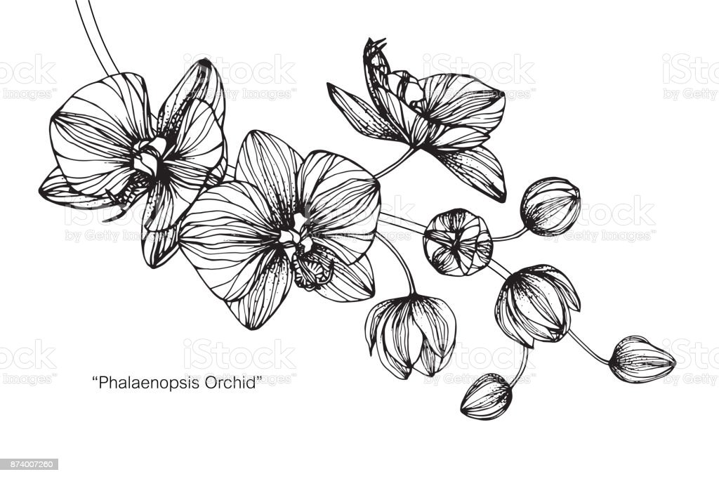 Dessiner une orchidee - Dessin orchidee a imprimer ...