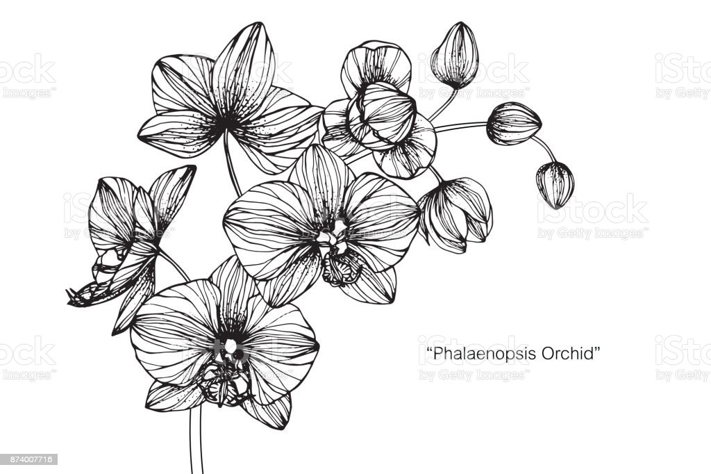 moth orchid coloring pages - photo#47