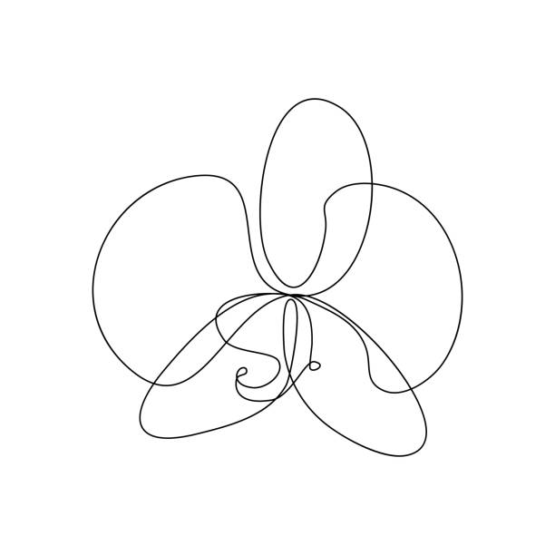 Phalaenopsis orchid flower Phalaenopsis orchid flower in one line art drawing style. Vector illustration orchid stock illustrations
