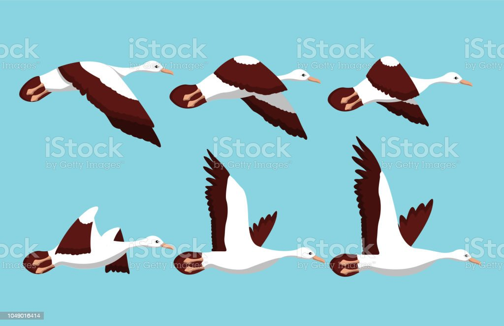 Phases of movement of the wings in the flight of a bird vector art illustration