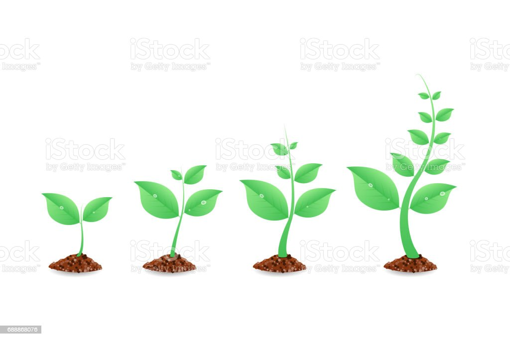 Phases plant growing. Planting tree infographic. Evolution concept. Seeds sprout in ground. Vector illustration. vector art illustration