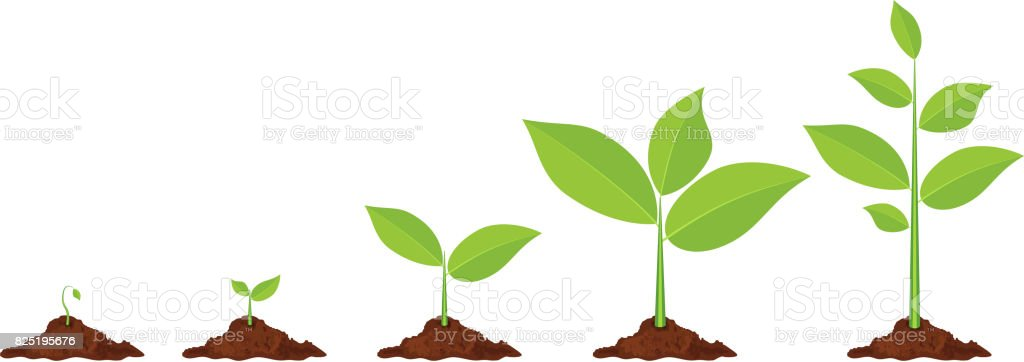 Phases plant growing. vector art illustration