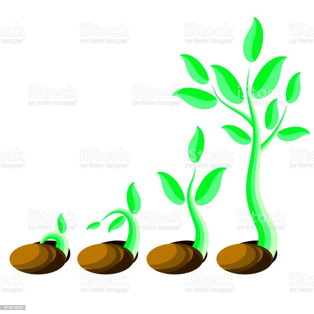 段階の植物の成長小さな緑の芽苗種子から発芽 アイコンのベクター