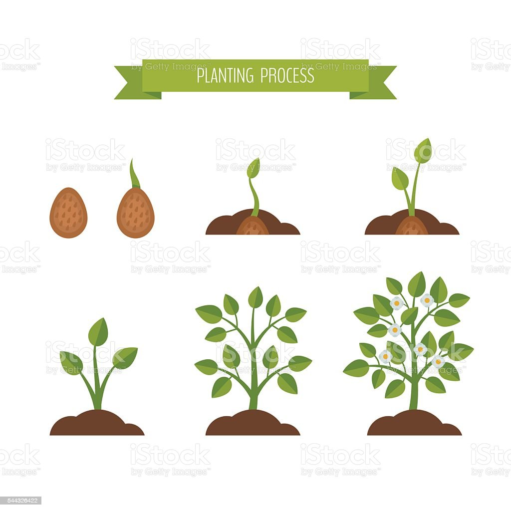 Phases plant growth. Sprout in the ground. vector art illustration