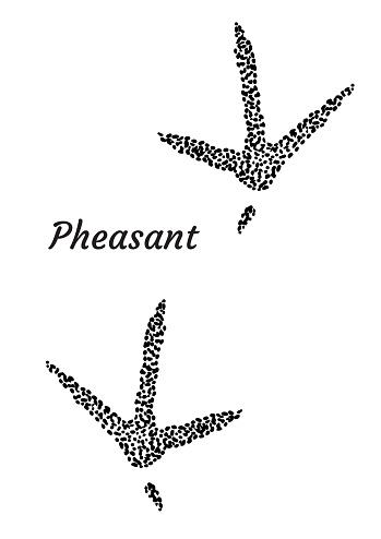 Pheasant Footprint Illustration Drawing Engraving Ink Line