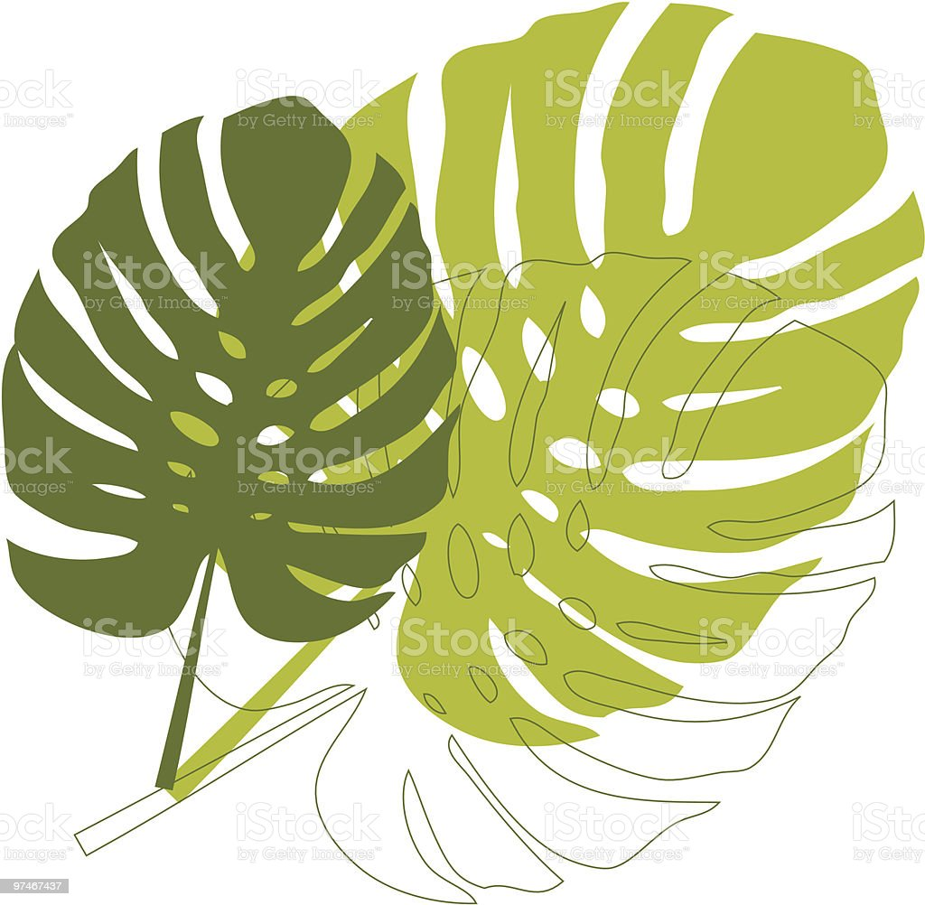 philodendron leaves royalty-free stock vector art