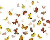 Photo of red, orange, and yellow butterflies