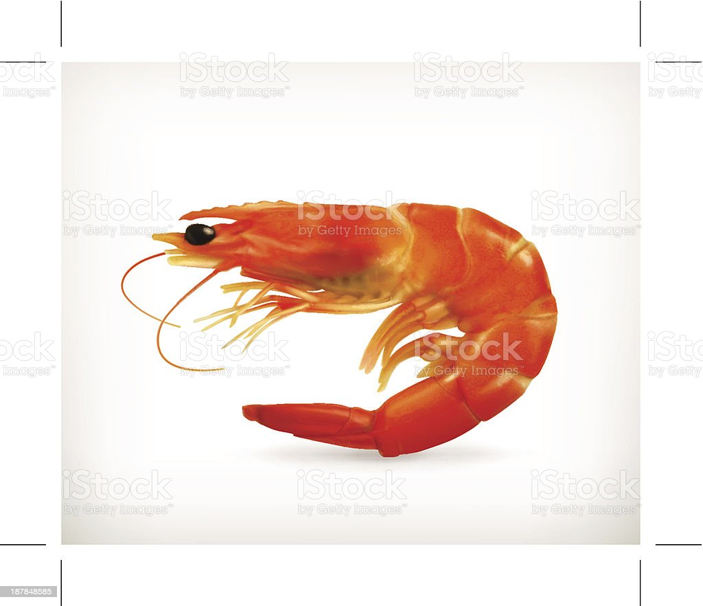 Photograph of a live shrimp on a white background vector art illustration