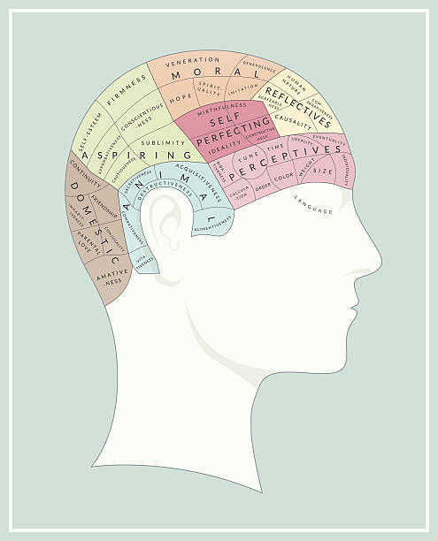 Phrenology Phrenology diagram - A detailed vector illustration with areas of the brain and personality traits labelled.  medical diagrams stock illustrations