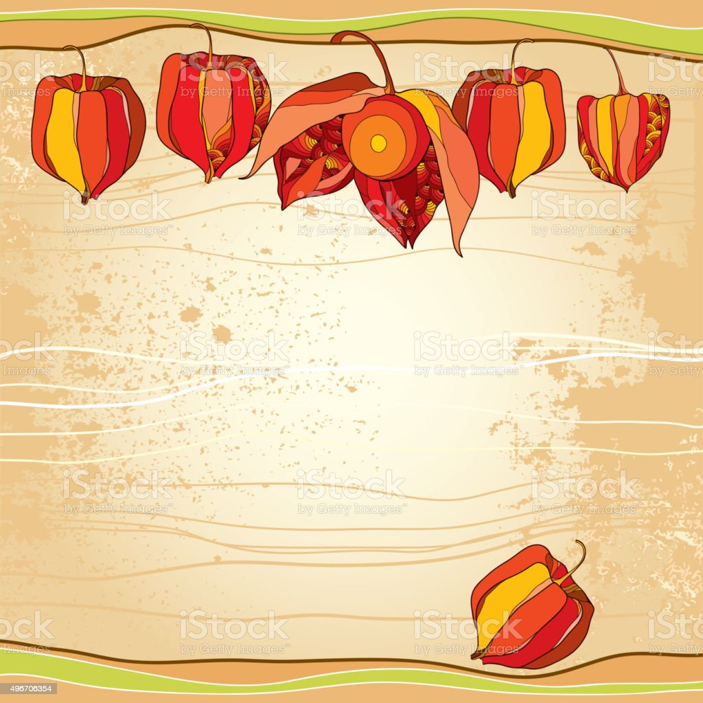 Physalis o cabo de gooseberry en la textura fondo beige - ilustración de arte vectorial