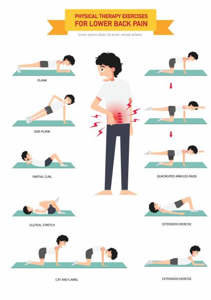 Physical therapy exercises for lower back pain infographic Physical therapy exercises for lower back pain infographic,vector illustration. backache stock illustrations