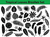Tropical Exotic Leaves Silhouette Collection with some flowers in black color for your designs as Coconut, Fan, Banana Palm, Aralia, Alocasia, Monstera, Fern, Bird of Paradise, Plumeria, Heliconia, Hibiskus. All Leafs are included as BRUSHES in Library.