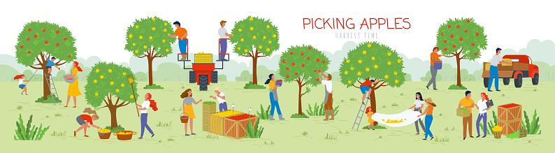 Picking Apples Harvesting Time, People in Garden