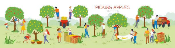 illustrazioni stock, clip art, cartoni animati e icone di tendenza di picking apples harvesting time, people in garden - raccogliere frutta