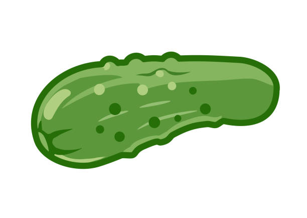 Pickle cucumber vector cartoon illustration, isolated on white background. Green vegetables, food groups, balanced diet theme design element. Pickle cucumber vector cartoon illustration, isolated on white background. Green vegetables, food groups, balanced diet theme design element. pickle slice stock illustrations