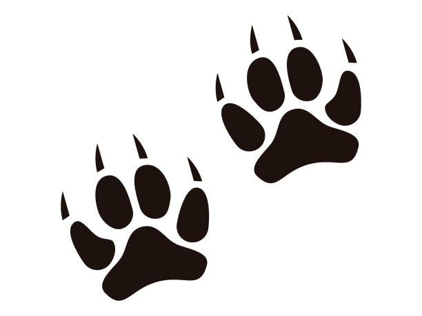 Picture of an Animal Footprint Vector illustration of an Animal Footprint paw stock illustrations