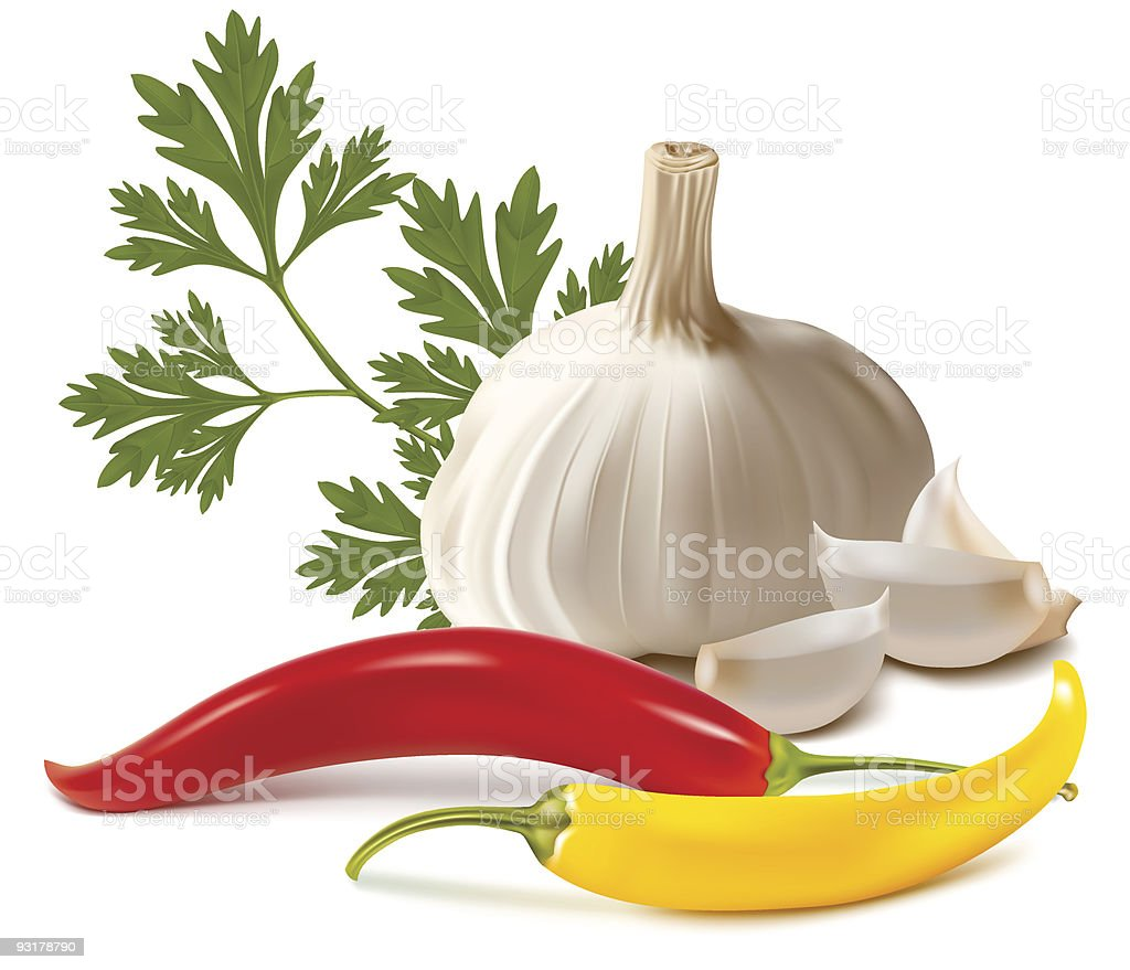 Picture of different spices on white background royalty-free stock vector art