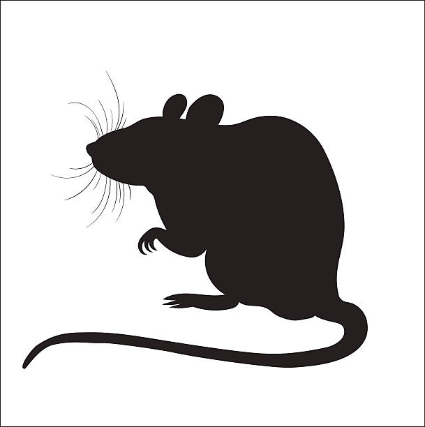 Royalty-Free (RF) Rat Clipart, Illustrations, Vector