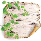 Piece of birch bark