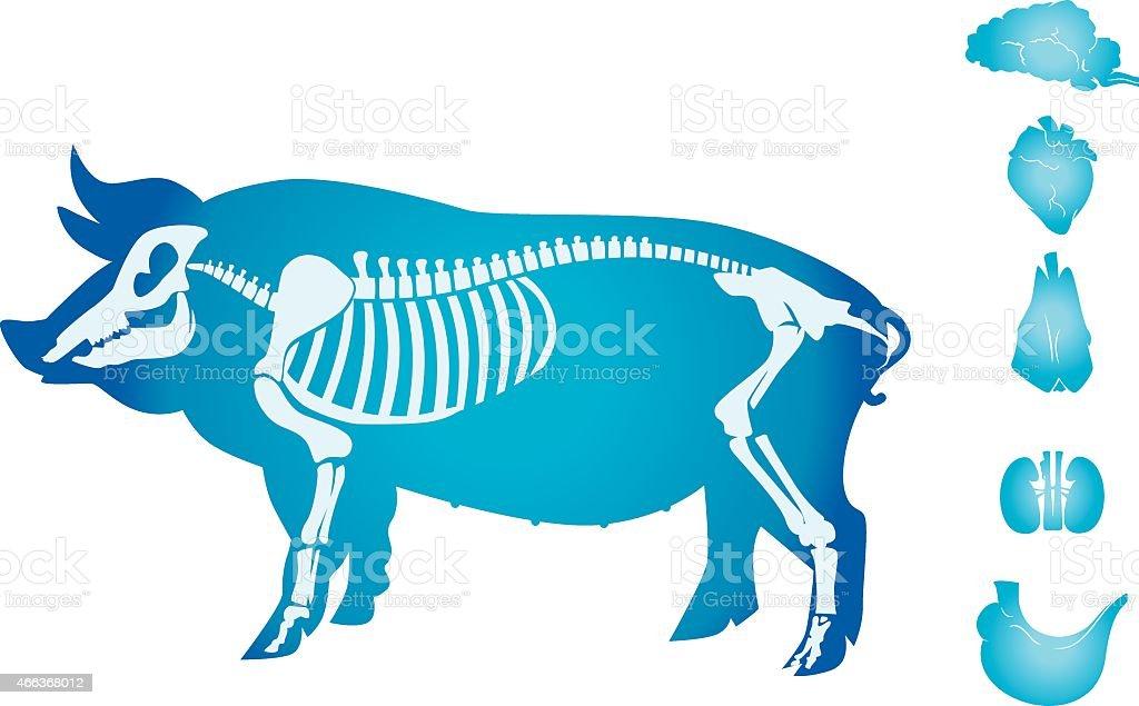 Schwein Anatomie Stock Vektor Art und mehr Bilder von 2015 466368012 ...
