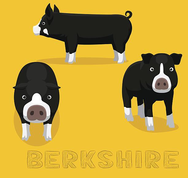 Pig Berkshire Cartoon Vector Illustration vector art illustration