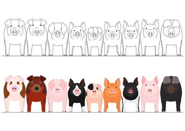 pig border set vector art illustration