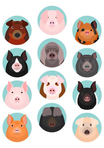 pig face set vector art illustration