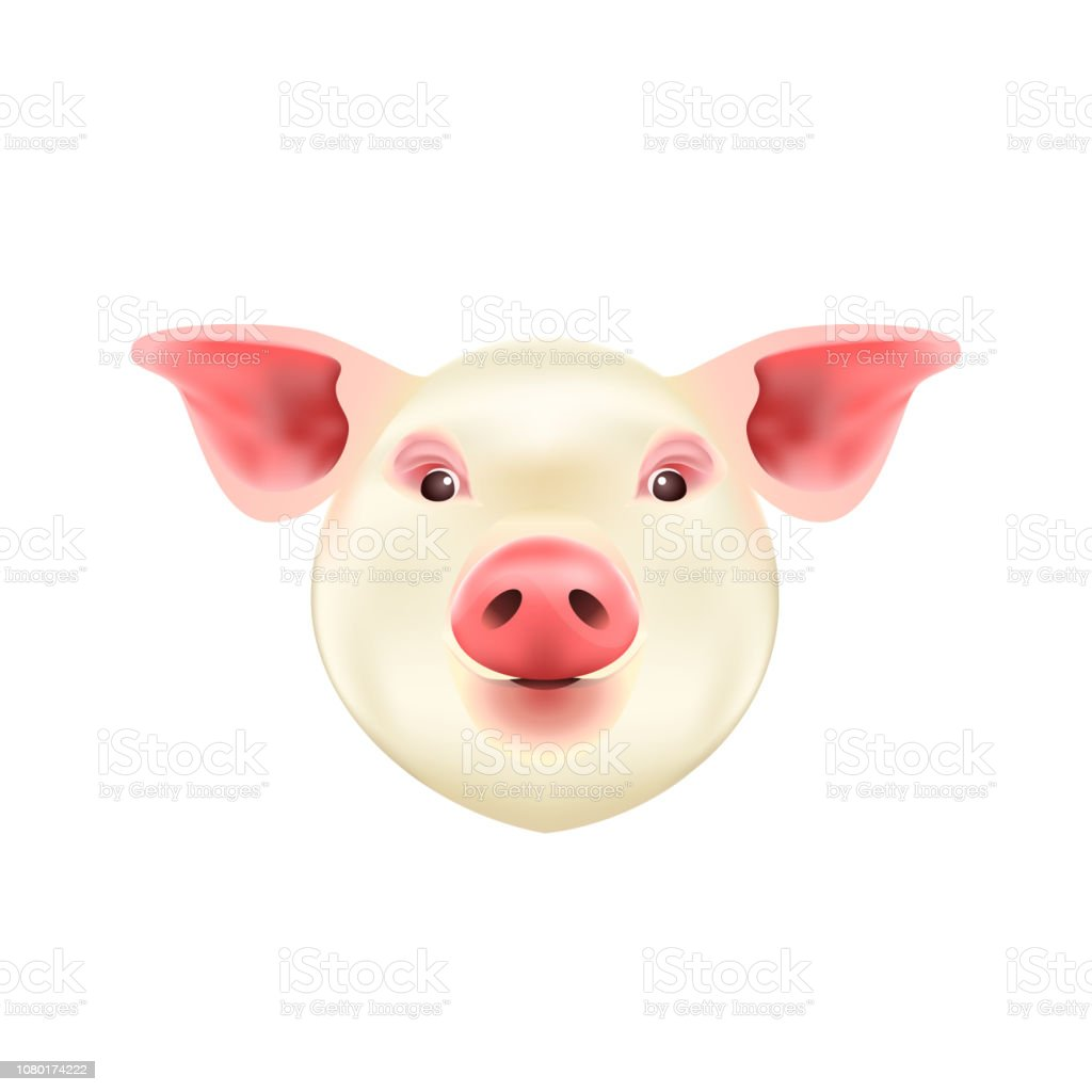 Pig Head Isolated on White Background. Symbol of 2019 Chinese Year.