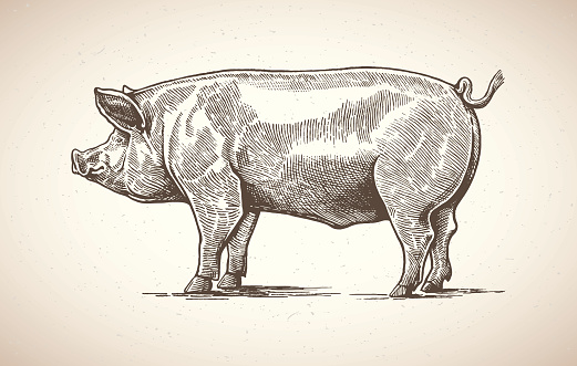 Pig in graphic image.