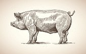 istock Pig in graphic image. 484783508