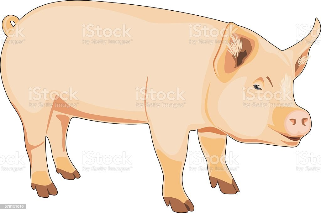 Pig isolated on the white vector art illustration