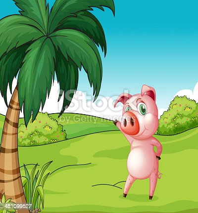 pig near the coconut tree on a white background