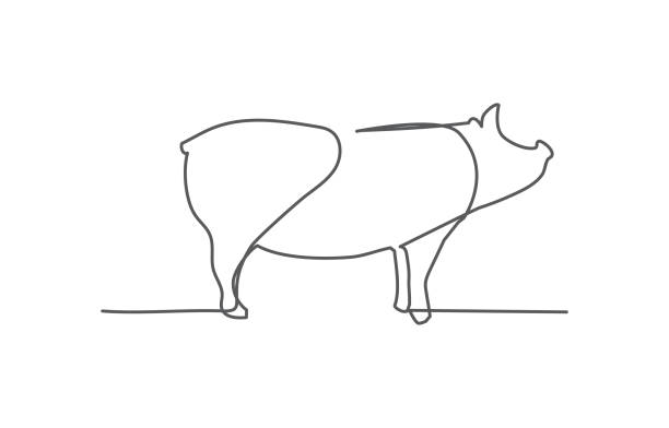 Pig One line drawing on white background vector art illustration
