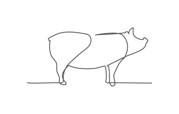 ilustraciones, imágenes clip art, dibujos animados e iconos de stock de pig one line dibujo sobre fondo blanco - calendario de naturaleza