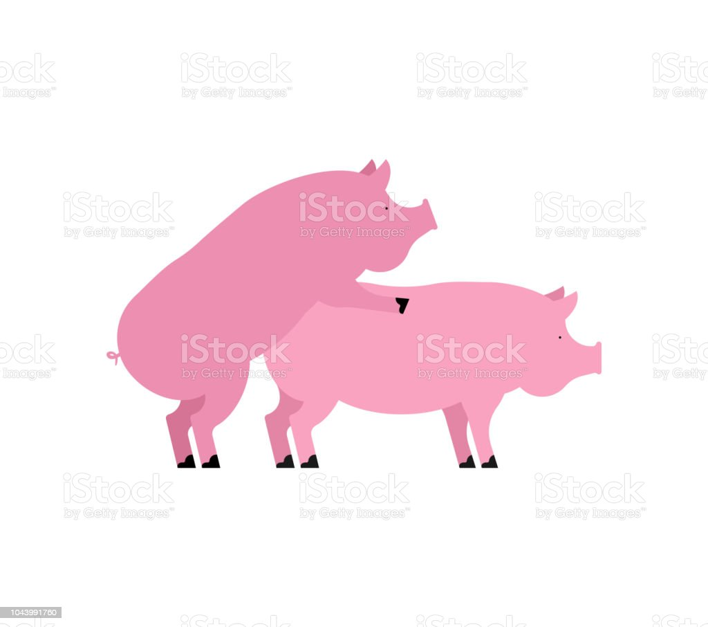 Sexe cochon. Rapports sexuels Piggy. Porcs isolés. Reproduction chez l'Animal de ferme - Illustration vectorielle