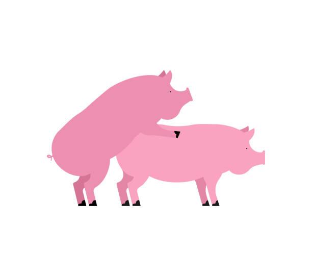 Sexe cochon. Rapports sexuels Piggy. Porcs isolés. Reproduction chez l'Animal de ferme - Illustration vectorielle