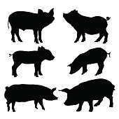 Detailed pig silhouettes set. Isolated on white background. Vector illustration