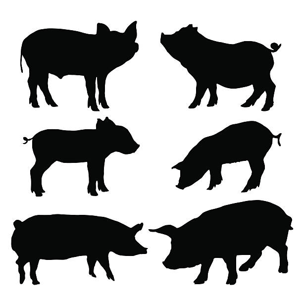 pig silhouettes set. vector illustration - 돼지 새끼 stock illustrations