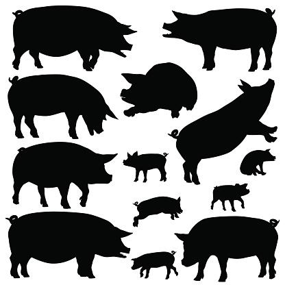 돼지 실루엣 0명에 대한 스톡 벡터 아트 및 기타 이미지