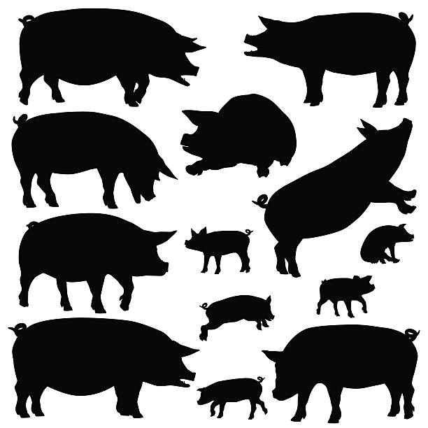 Pig silhouettes vector art illustration
