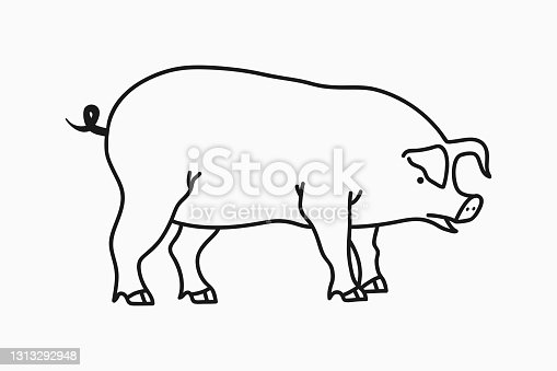 istock Pig sketch. Hand drawn pig isolated on white background. Vector 1313292948