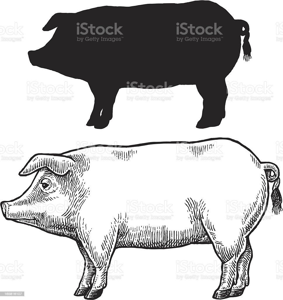 Pig, Swine or Hog vector art illustration